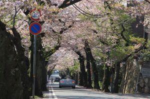 Sakura_l02