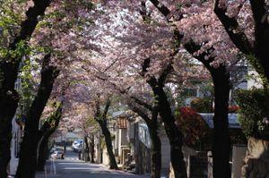 Sakura_l09