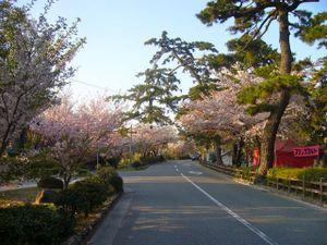 Sakura_m1
